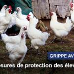 Influenza-aviaire-hautement-pathogene-H5N8-risque-eleve-sur-l-ensemble-du-territoire-metropolitain_large